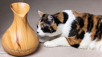 aromadiffuuseri, kissa