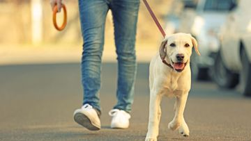 koiran kanssa lenkillä