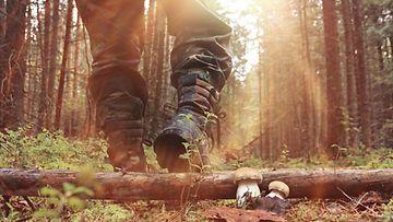 metsä, vaellus