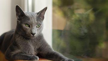 Kissa ikkunassa
