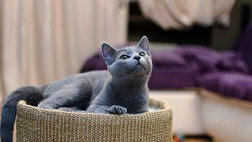 Kissa katsoo