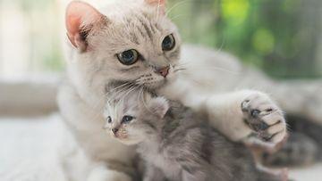 Kissanpentu ja emo
