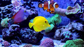 akvaario, kalat