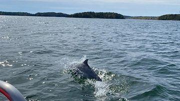 delfiini 2