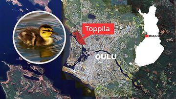 Oulu Toppila sorsat
