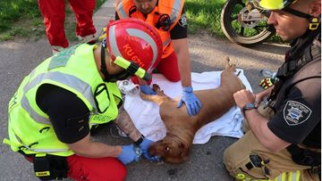 OMA pelastuslaitos, koira, tulipalo, lemmikit 1