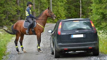 hevonen ratsastaja ratsukko