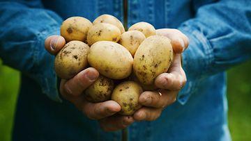 peruna perunat