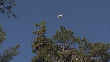 Drone merikotkan pesän yläpuolella