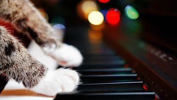 kissan tassut, piano
