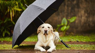 koira ja sateenvarjo
