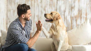 Shutterstock: Koira, ihminen, yläfemma