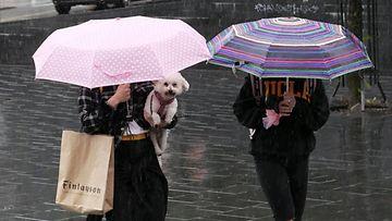 Kesä sade kaupunki koira LEHTIKUVA