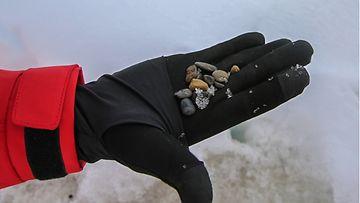MOSAiC-tutkimuksessa selvisi, että jään laikukkainen ruskea väri johtui jään sisältämistä sedimentistä, pienistä kivistä ja simpukoista.