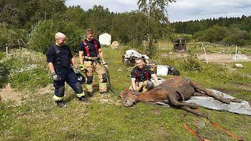 L-uudenmaa.pelastuslaitos.hevonen