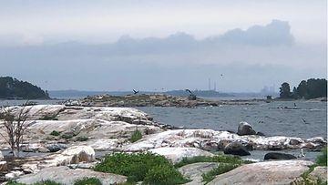 Merimetsot, luoto, saaristo, Espoo