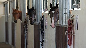 AOP, hevonen, talli, hevoset, hevostalli