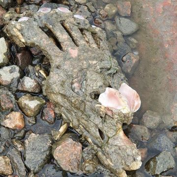 Poliisin kuva: merestä löytynyt karhun käpälä