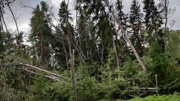 OMA Myrsky, Luvia