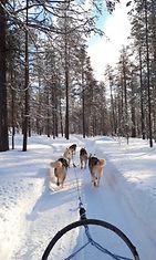 arctic husky runaway reki