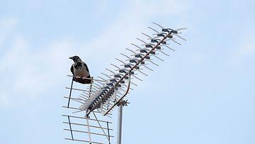 AOP televisio antenni varis 1.03735570