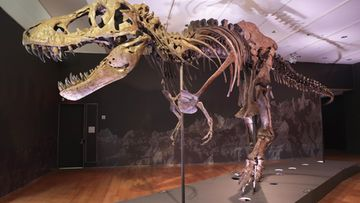 AOP tyrannosaurus rex