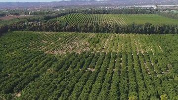 Avokadot, avokadoviljelmä, Portugali