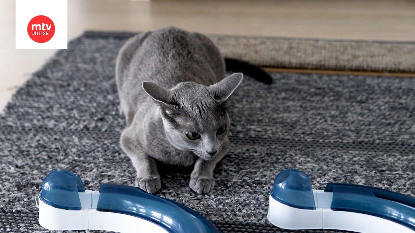 Kissan Naukuminen