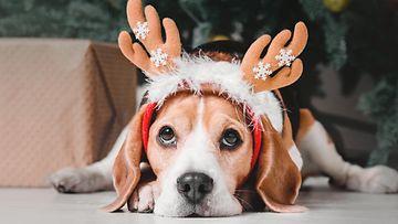shutterstock koira joulu