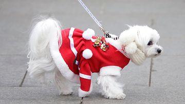 AOP koira joulu Japani Tokio