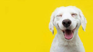 shutterstock tyytyväinen koira