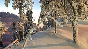 AOP, talvi, pakkanen, lumi, metsä