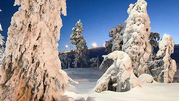 AOP, talvi, lumi, kinokset, pakkanen, metsä, tykkylumi
