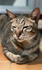 Sisu-kissa 3