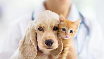 shutterstock kissa koira eläinlääkäri
