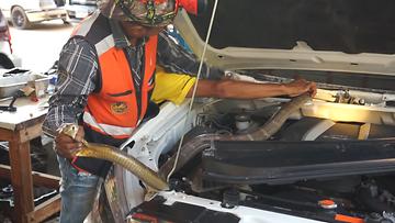 OMA: Käärme, auto, thaimaa