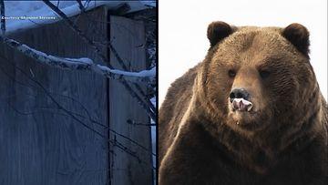 OMA huussi-karhu
