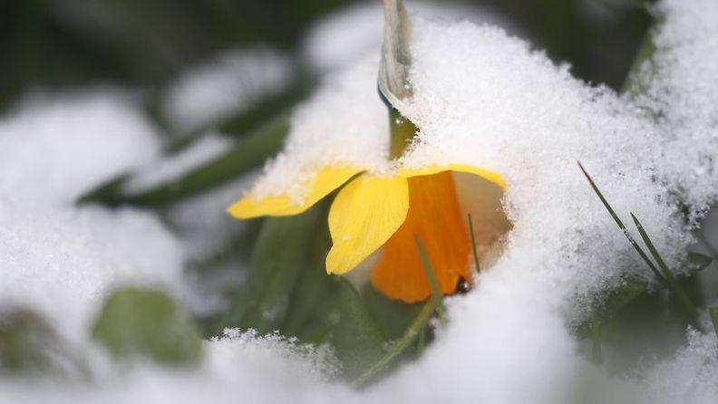 AOP lumi kukka talvi kevät
