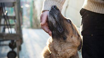 shutterstock koira omistaja