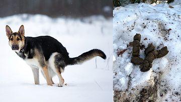 koirankakkapääkuva