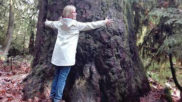 Vancouverin saaren rehevää luontoa, vuosisatoja kasvaneita Douglas-mäntyjä.