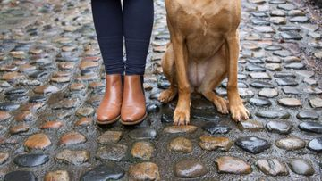 shutterstock nainen koira