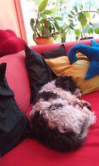 KUVA VAIN LIFESTYLEN JUTTUUN   NONO lepää punaisella sohvalla