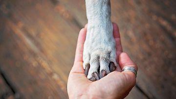 shutterstock koira tassu