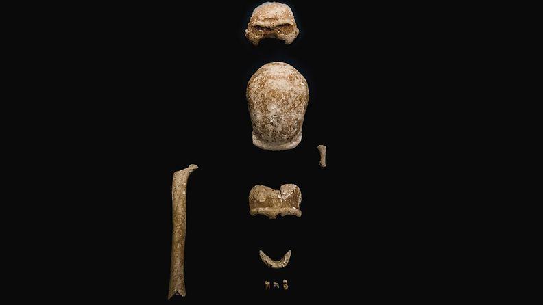 AOP italia neandertalilainen fossiili