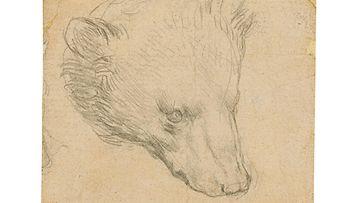Leonardo Da Vinci karhu piirros REUTERS