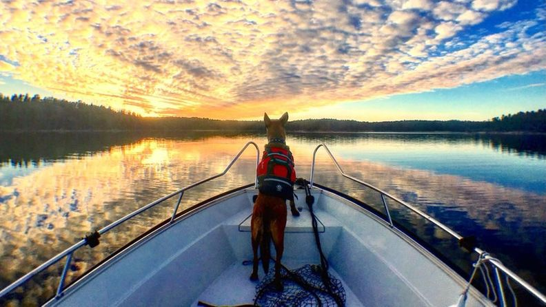 koiralla pelastusliivit