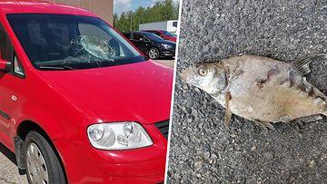 """Ollin auton tuulilasiin pamahti kirkkaalta taivaalta kala: """" Tapaus on hyvin poikkeuksellinen"""""""