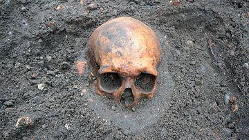 Pääkallo vielä puoleksi maahan hautautuneena arkeologisella kaivauksella.