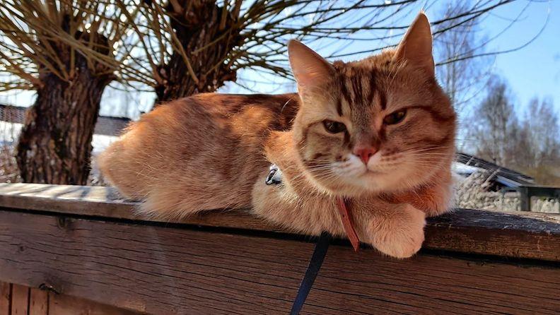 Felix-kissa
